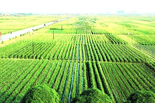 通辽市科左中旗市积极打造中部绿色现代农业示范区