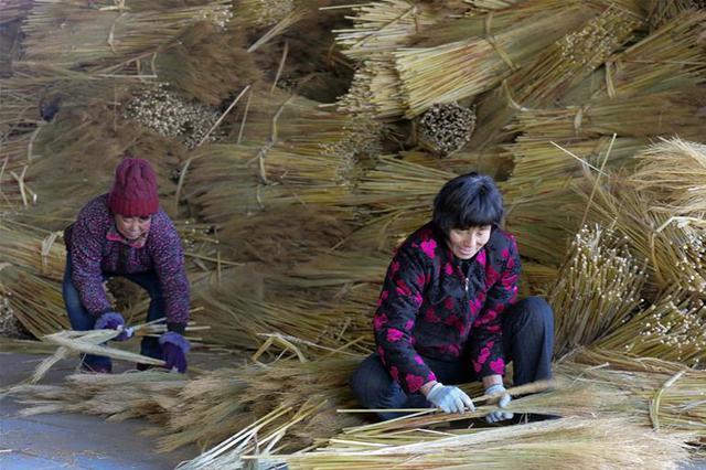 内蒙古赤峰:手编笤帚苗 架起致富路