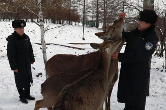 图为:民警喂养马鹿与梅花鹿(韩志祺摄)
