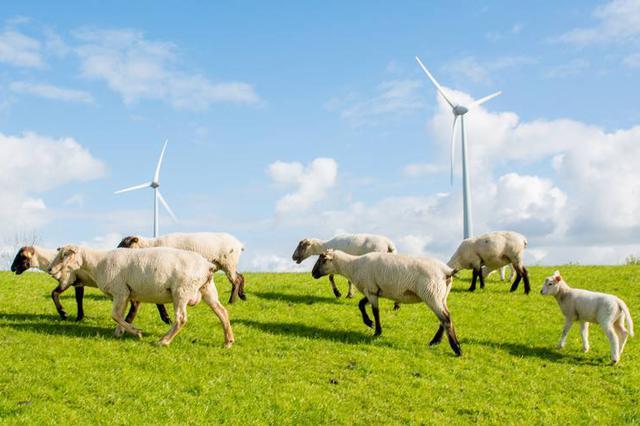 乌兰察布市龙头企业带动农牧业发展助力脱贫攻坚