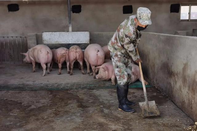 阿拉善养猪能手冯建平:带领农牧民共同致富