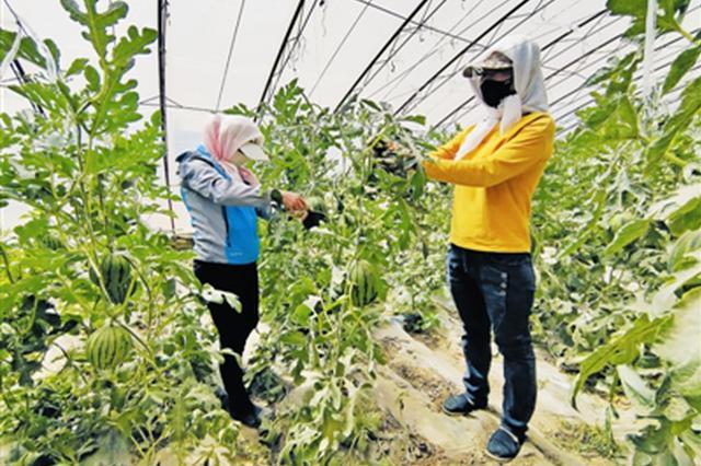 """库伦旗:""""公司+基地+农户""""模式带动贫困户增收"""