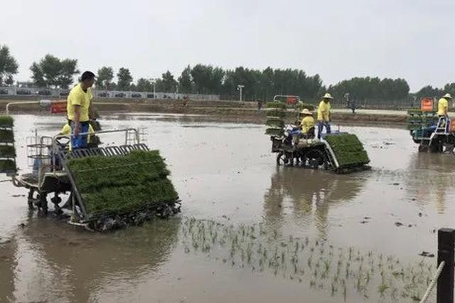 兴安盟扎赉特旗举办首届水稻插秧节 宣传稻米文化