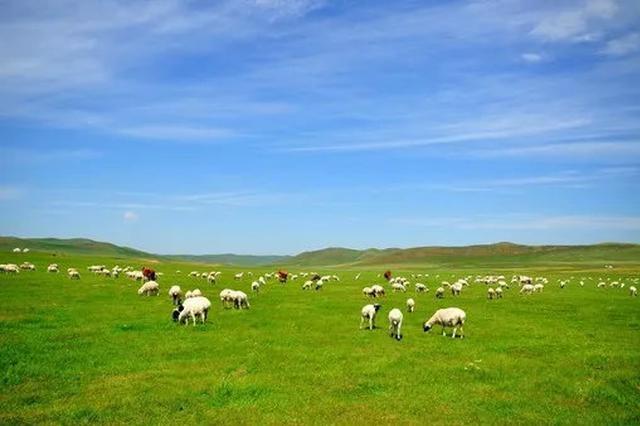 爱上内蒙古 | 乌拉特草原上绽放的文化盛宴