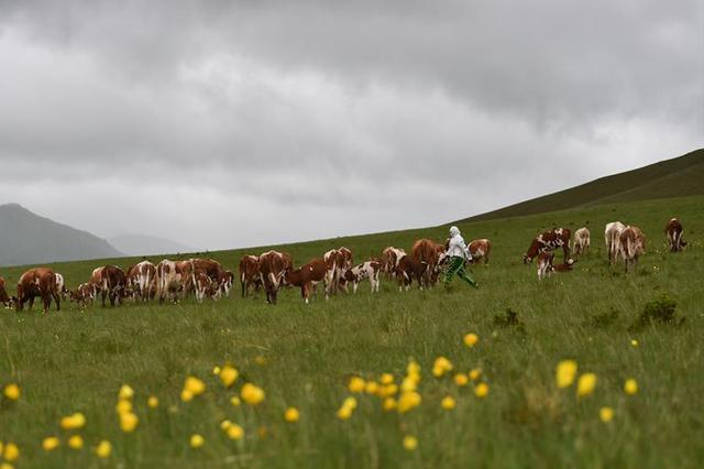 草原上的游牧迁徙:水草丰美那畔行