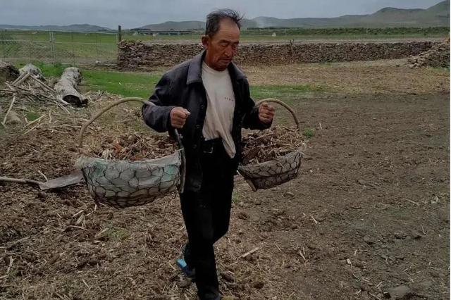 科尔沁右翼前旗村民李东贵:我要把这片树林献给国家