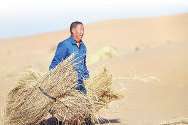 绿意延展 黄沙止步 世界防治荒漠化和干旱日