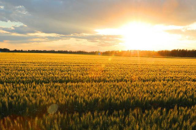 高标准农田建设打造开鲁县观光农业与乡村旅游样板