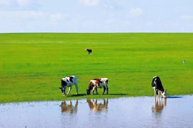夏日的锡林浩特:绝色草原,唯美梦境