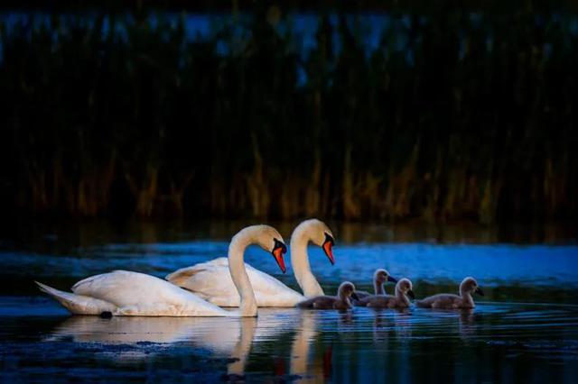 从《诗经》飞往巴彦淖尔的原野与湖泊