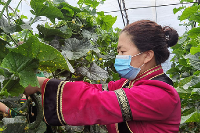 """内蒙古呼伦贝尔市:""""太空蔬菜"""" 助推产业升级"""