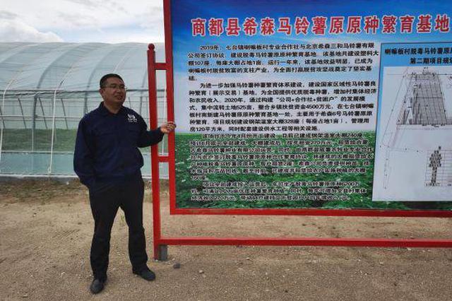 """中国北方乌兰察布县城一粒薯种的""""国际化脚步"""""""