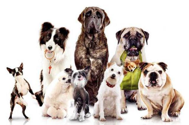 呼和浩特市警民共建流浪狗之家 推动文明养犬新风