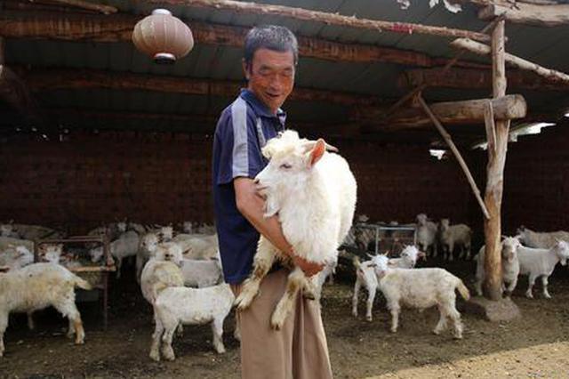 """走向小康生活 """"扶贫羊""""带领贫困户走上""""羊光大道"""""""