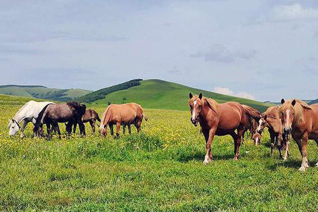 爱上内蒙古 丨 在内蒙古最美的季节 请到草原来