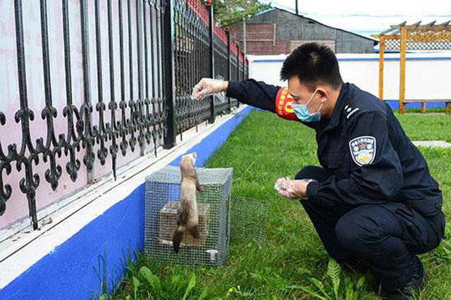兴安边境管理支队成功放归一只国家一级保护动物紫貂