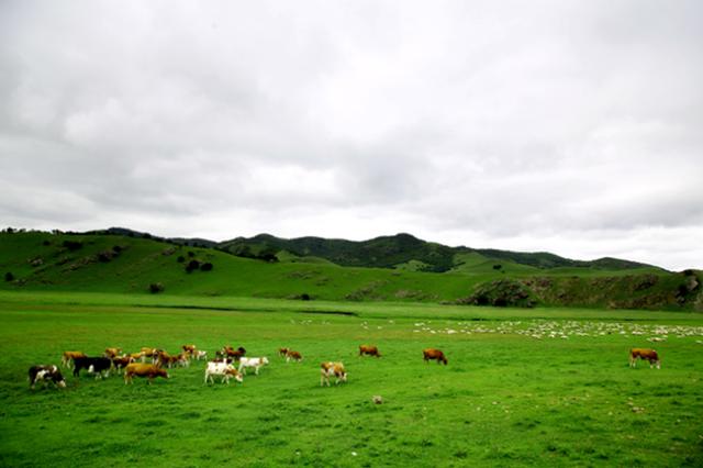 爱上内蒙古丨八月 我在乌兰毛都大草原等你