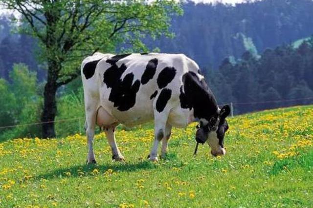 今年内蒙古安排4亿元专项资金扶持乳业发展