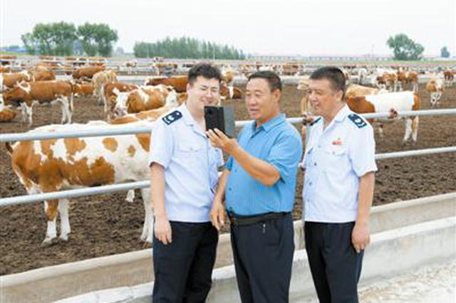 """""""有招书记""""直播卖牛"""
