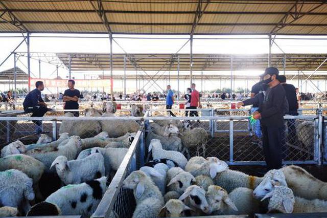内蒙古科右中旗:向牛羊全产业链发展迈出关键一步