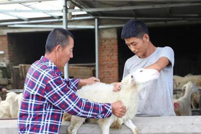 """内蒙古羊倌发""""羊""""财 成脱贫""""领头羊"""""""