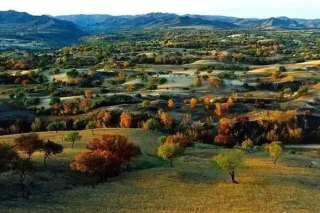 浑善达克沙地森林覆盖率20年提高了10个百分点