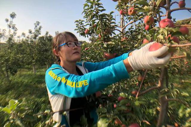 """宁城苹果拿到了蒙东首家水果出口""""通行证"""""""