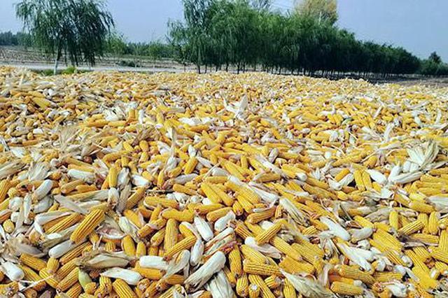 巴彦淖尔市:盐碱地改良不再是世界难题