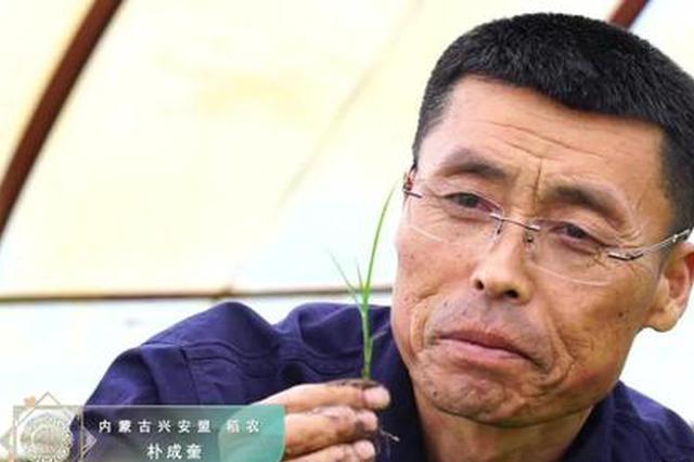 爱上内蒙古 │ 净产好米 这就是内蒙古大米的境界