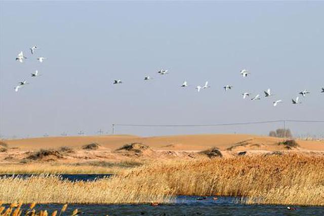 中国第八大沙漠境内湿地迎来大批迁徙候鸟