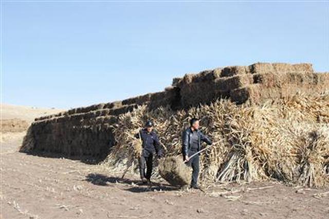 通辽扎鲁特旗储备饲草27.4亿公斤 确保牲畜安全越冬