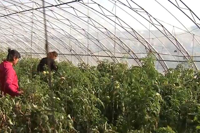 乌兰浩特市斯力很现代农业园区:助农脱贫奔小康