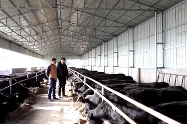 """我可爱的家乡丨巴达尔胡——兴旺的""""牛""""日子"""
