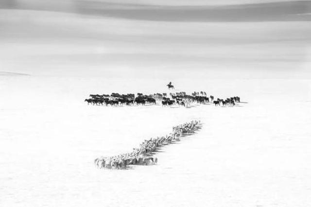 爱上内蒙古 丨 用镜头捕捉草原生灵的踪影