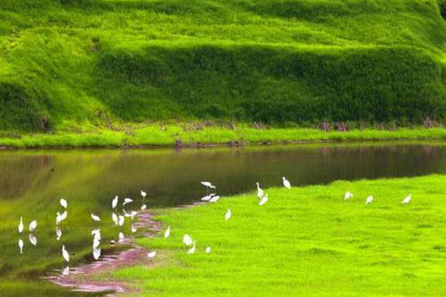 绿下生金有门路——探索生态文明建设的科左中旗实践