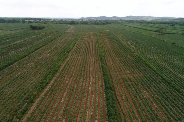 通辽市科尔沁区优化农业产业体系推动三产融合发展