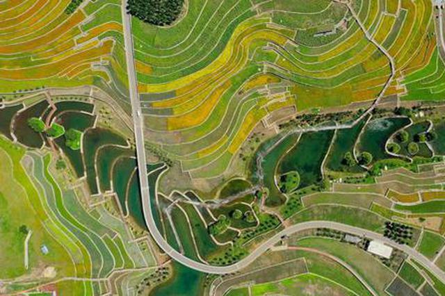 美丽生态激活美丽经济 兴安盟走上绿富同兴的发展新路