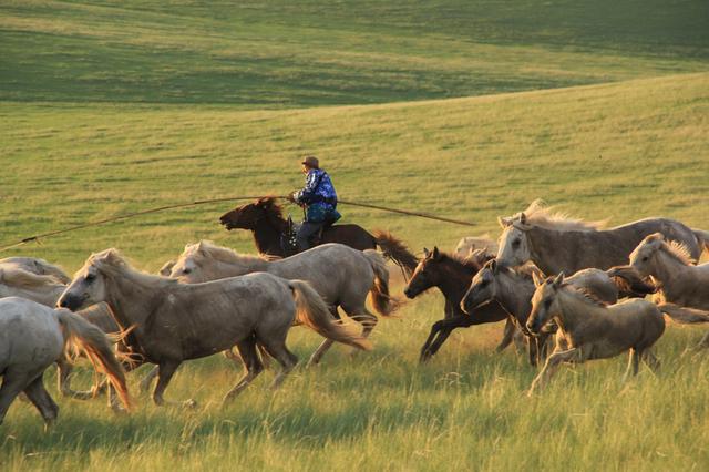 爱上内蒙古丨银装素裹中回忆绿色的锡林郭勒