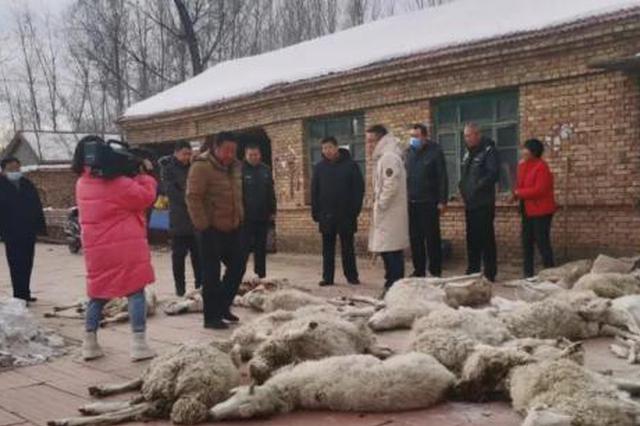 内蒙古赤峰市翁牛特旗26只羊遭狼群袭击