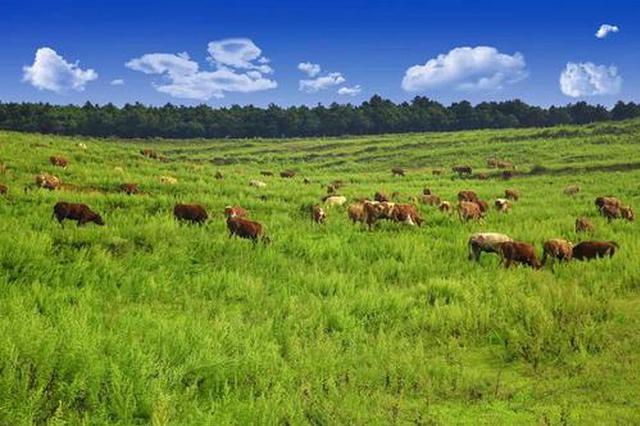"""兴安盟农牧局努力加快推动""""两米两牛""""农牧产业"""