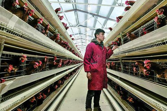 兴安盟科右前旗养殖合作社助贫困户养鸡确保增收