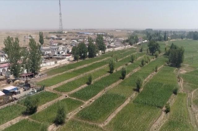 乌海市农业局:做好新时期三农工作实现更美乡村