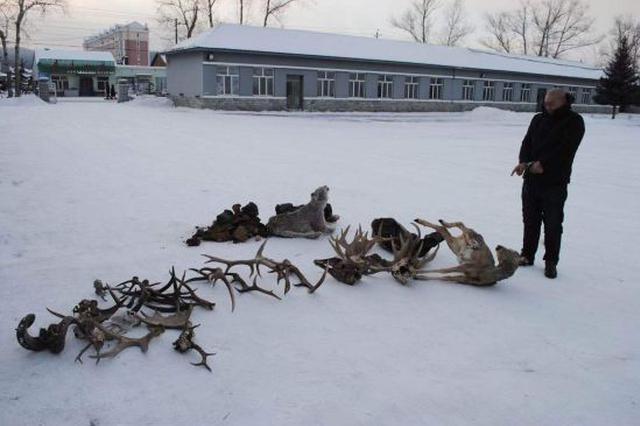 内蒙古额尔古纳破获一起非法猎捕濒危野生动物案