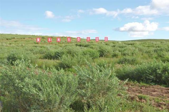 乌兰察布市化德县筑牢首都北方重要生态安全屏障