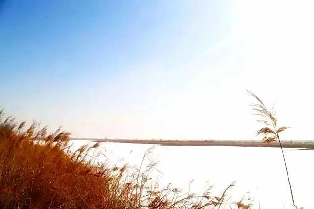 愛上內蒙古 | 南海濕地景區——候鳥的天堂