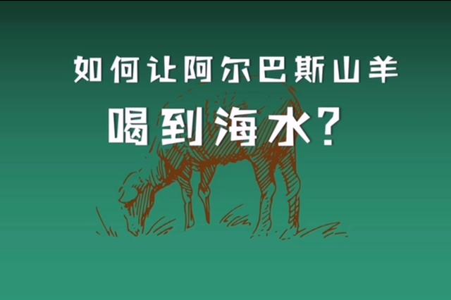 """如何讓內蒙古草原上的珍珠阿爾巴斯山羊""""喝""""到海水"""