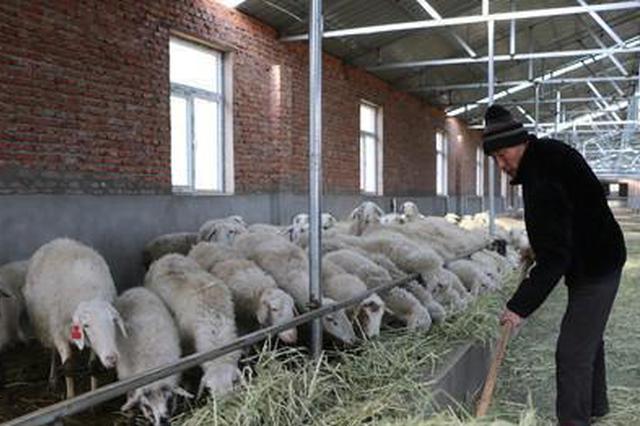 """產業興旺""""圈粉""""科爾沁草原農牧民獲得感、幸福感爆棚"""