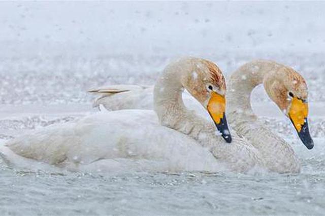 愛上內蒙古 | 春雪中的東烏珠穆沁旗道勞德湖似仙境
