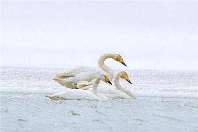 愛上內蒙古 丨 春雪中的東烏珠穆沁旗道勞德湖似仙境