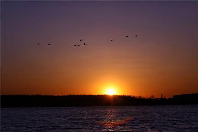 通遼市扎魯特旗:工業園里候鳥翩翩飛 人與自然和諧畫卷美